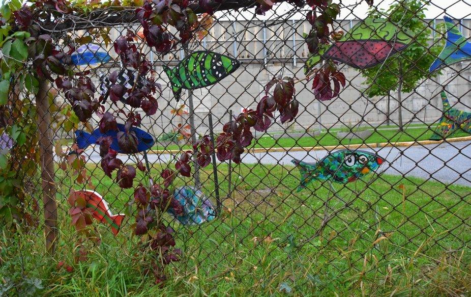 Cool fence art seen while walking the neighborhood.