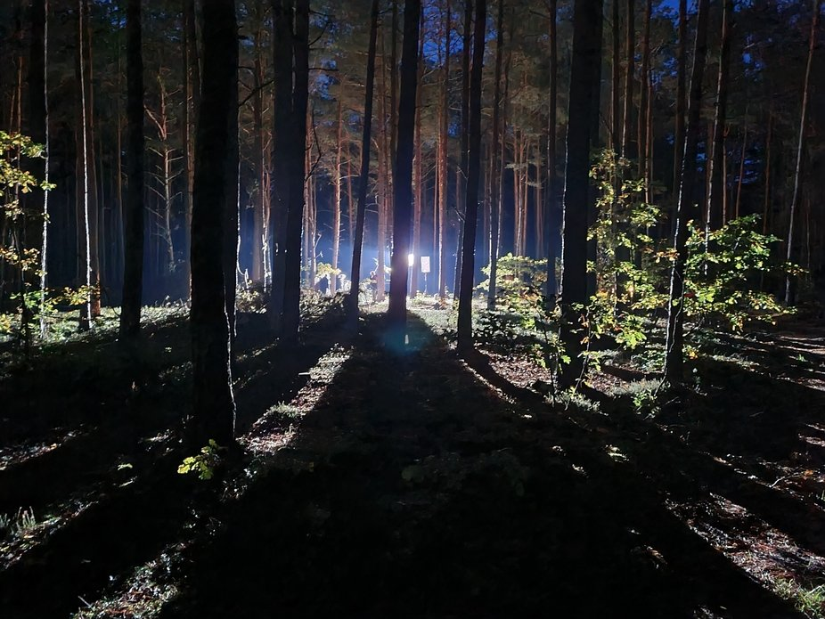 Light in forest