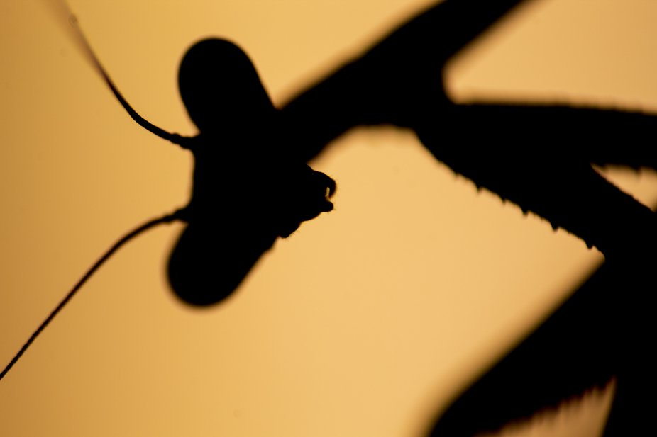 It is wonderful to be able to capture an insect as well known as this and have it as if it were a...