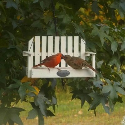 Daddy and Daughter Cardinals