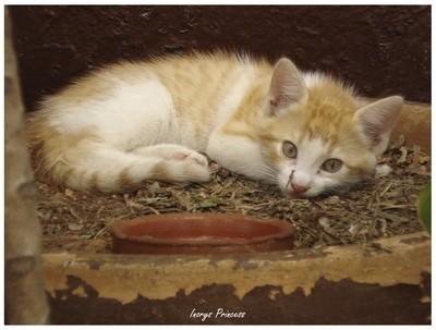 Kitty from Cuba!