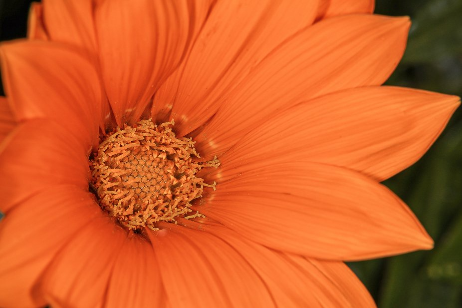 Inside the orange