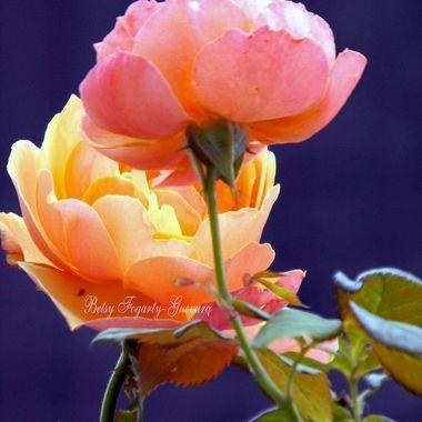 Hi Rose