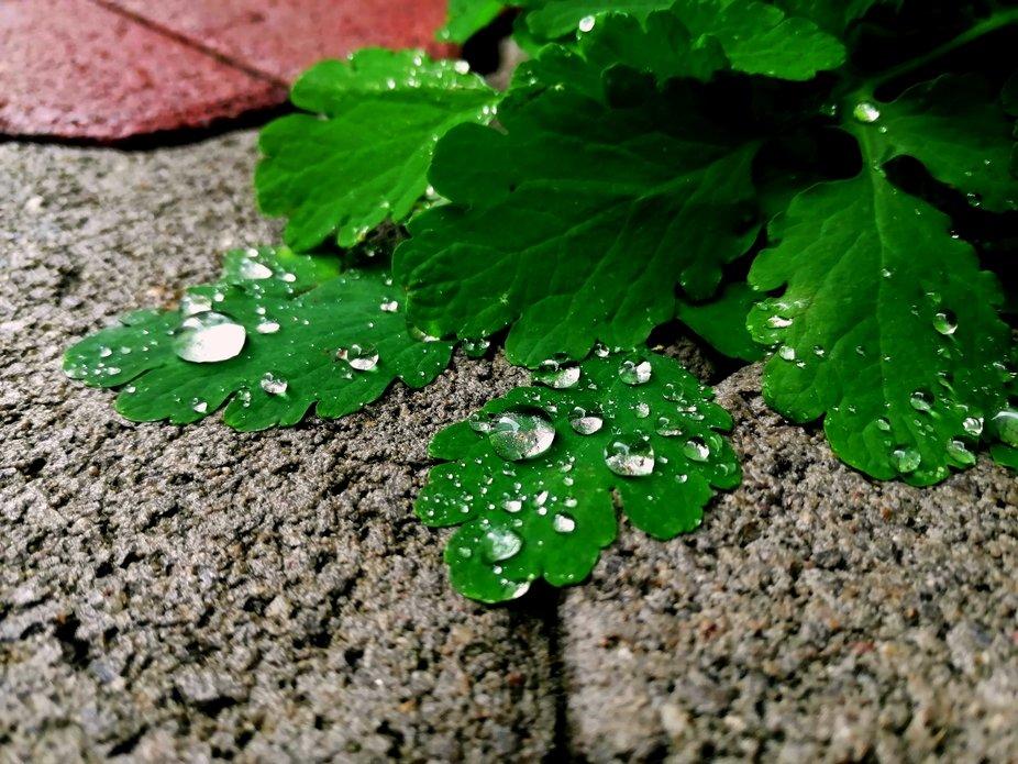 Resting Droplets