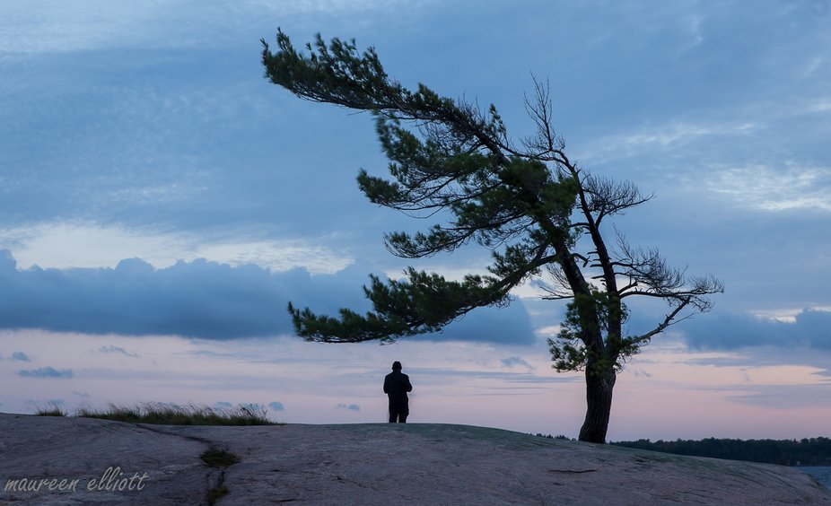 This white pine is an iconic tree in Ontario on the shores of Georgian Bay.