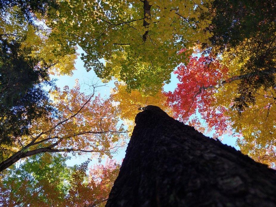 Treetops in Michigan during fall 2020