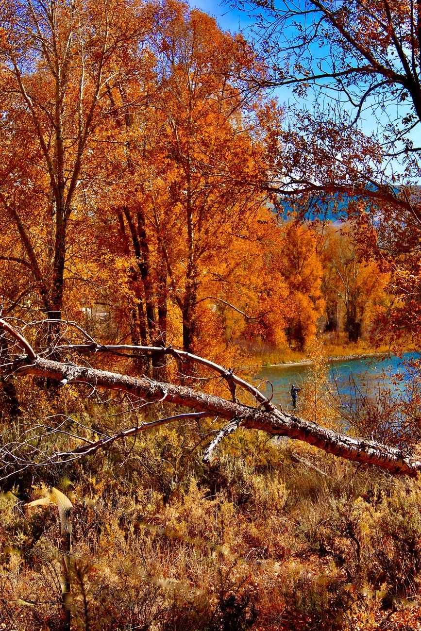 Fall Fly Fishing on the Colorado River