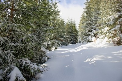 Winter Snow Country Road without people and footprints, Czech Republic, Kralicky Sneznik