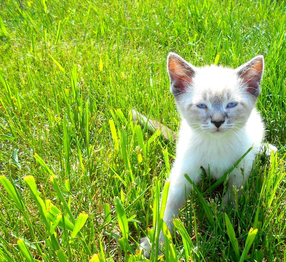 Coco Kitten and her first day ever outside. 2020