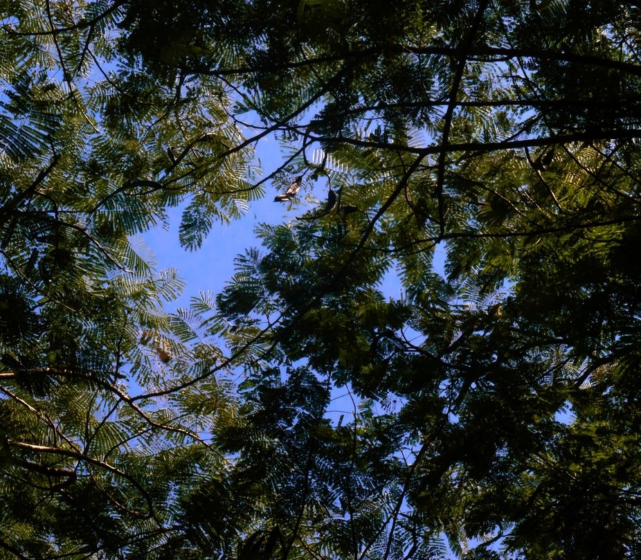 Shot of the skies, showing patterns amongst the trees