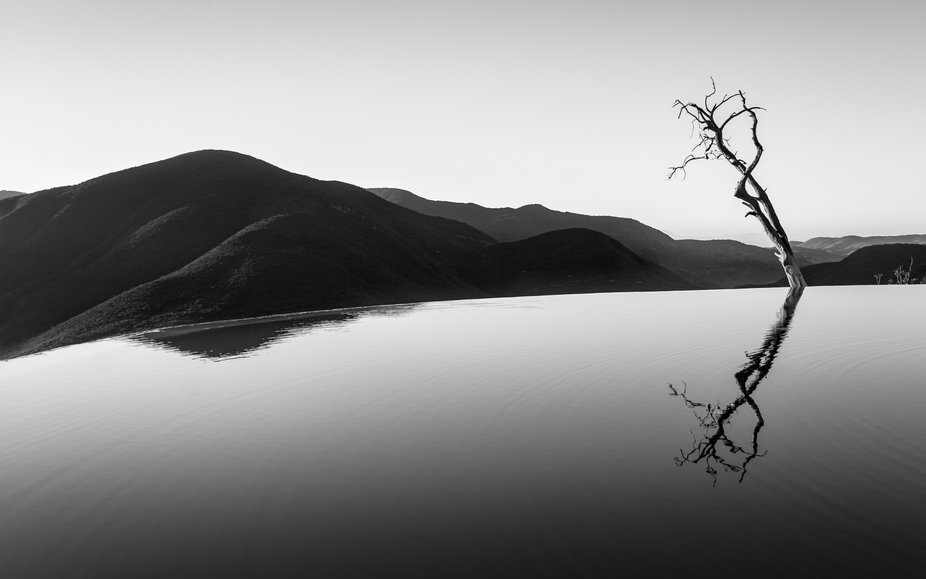 A resistant old tree reflecting on this unique natural pool at the top of the mountain.