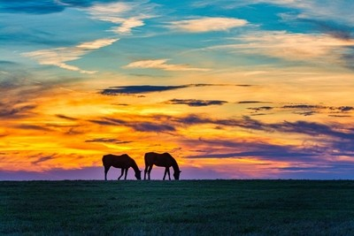 Two Horses at Sunset