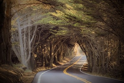 Cypress Tree Tunnel North of Fort Bragg, Highway 1, California