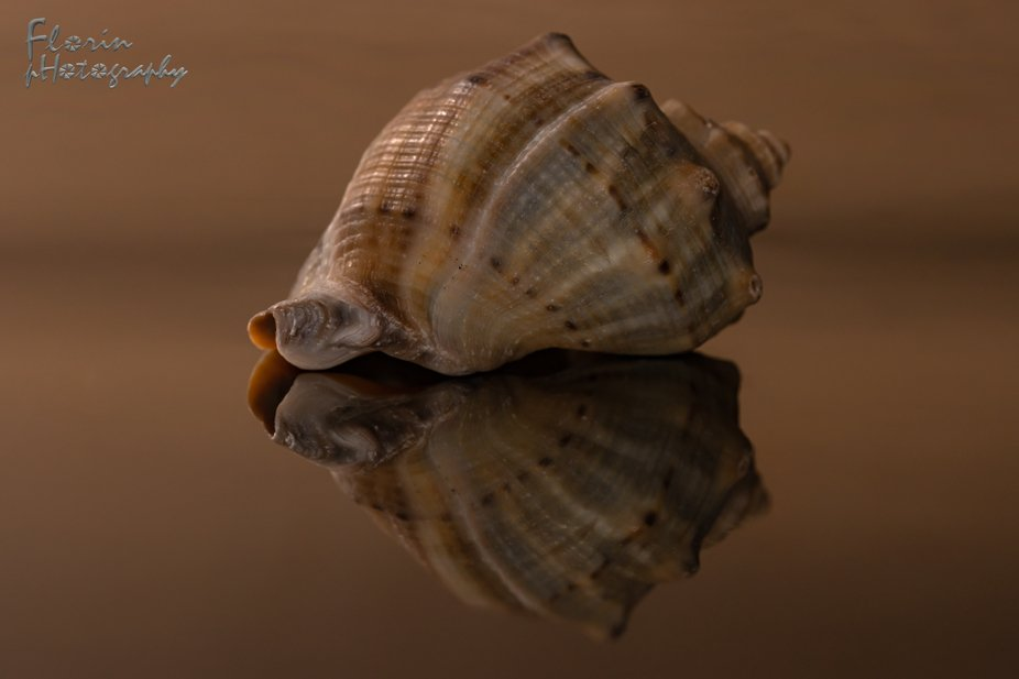 Shell and reflection