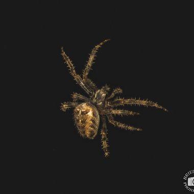 spider-0573