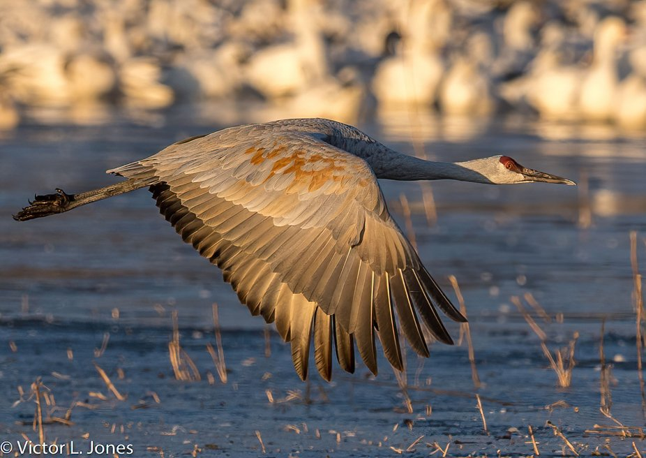 Bosque Del Apache NWR - My favorite place to photograph wildlife.