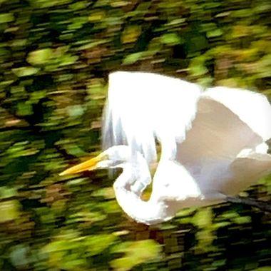 High Speed Flyer