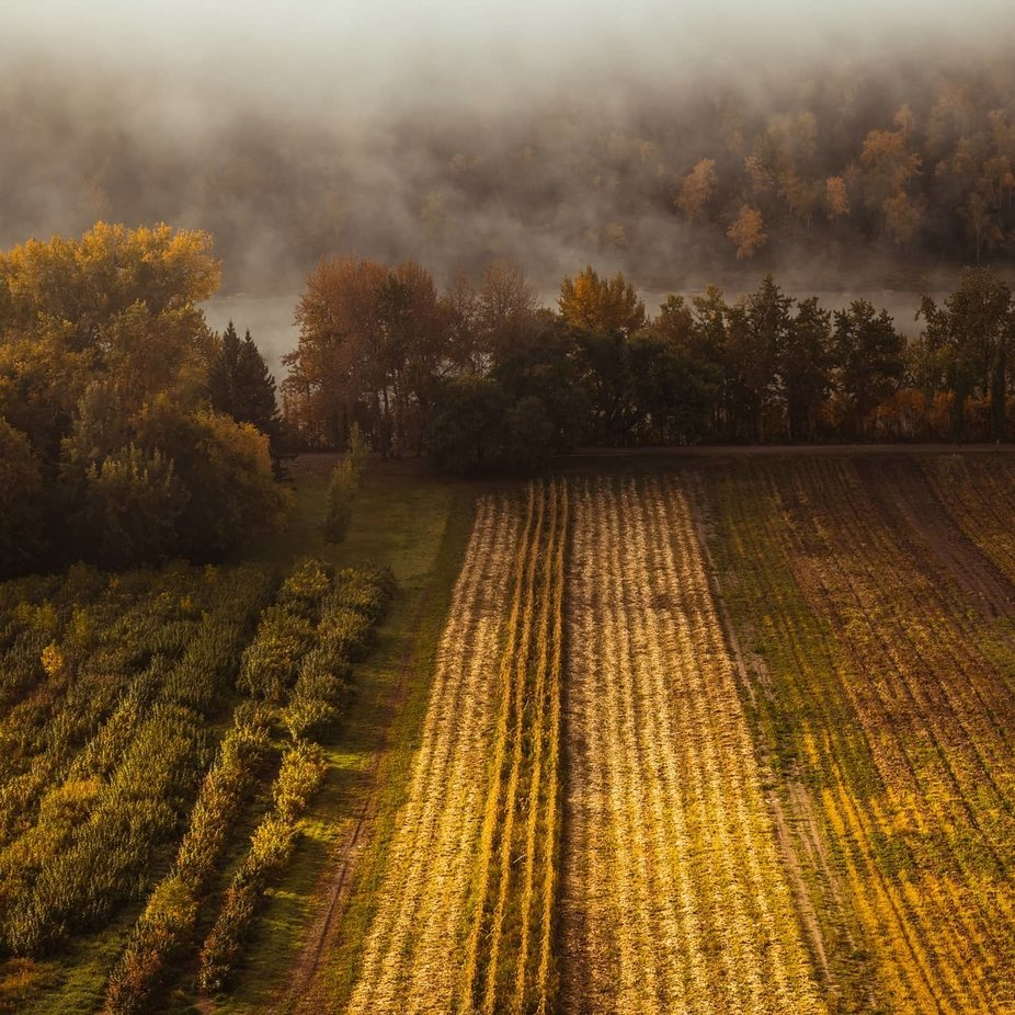 Morning Fog by NVisual - Capture Patterns Photo Contest