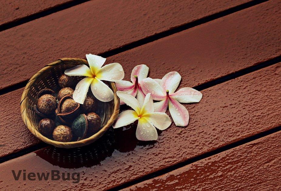 Macadamia Nuts and Plumeria Flowers.   (Hawaii State Symbols)