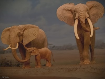 Elephant family outing