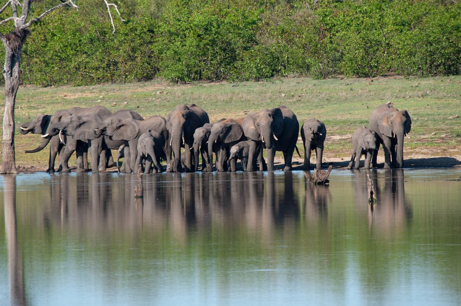 Elephant Herd getting a drink