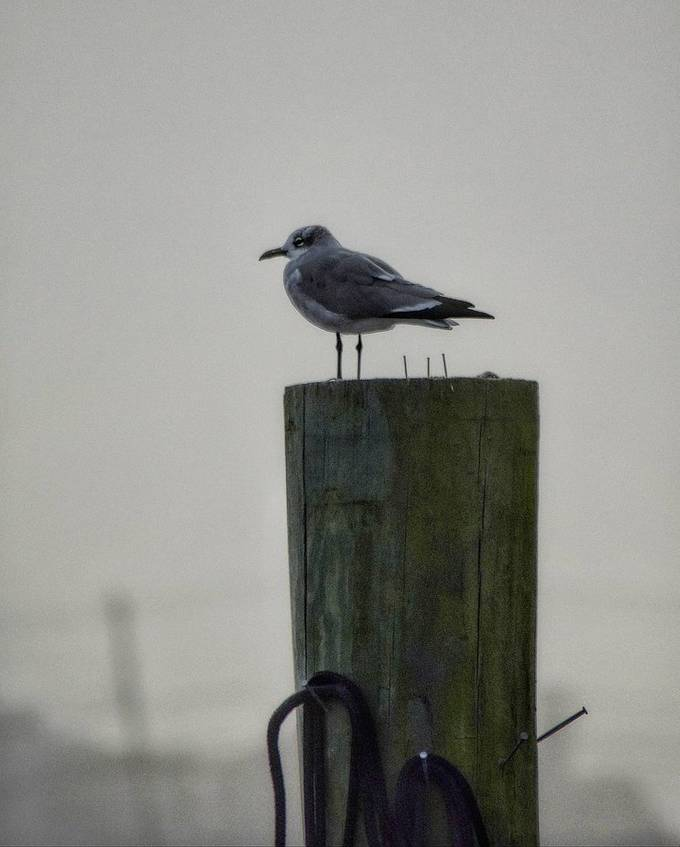 sitting on his perch during a foggy day in New Jersey