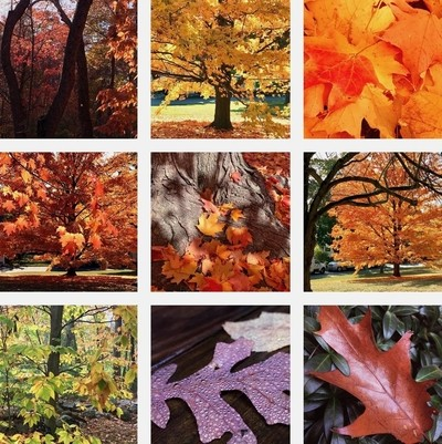 October Colors Collage.jpeg