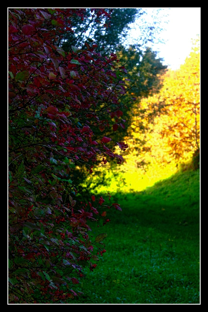 Fall colors in a late sun It is abnormal in Belgium for this time of year. Just look at the beautiful incidence of the sun on these fall colors. Sincerely Theo-Herbots-Photography https://groetenuittienen.blog/