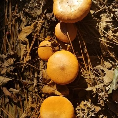 A cluster of mushrooms