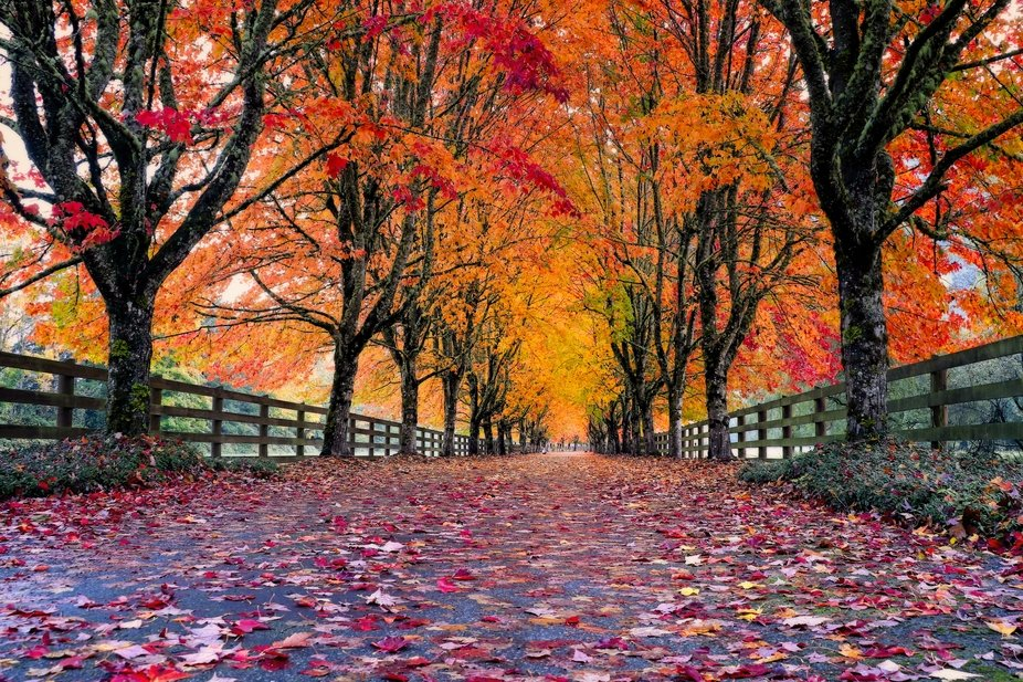 Fall colors brighten the entryway to this farm in Washington...