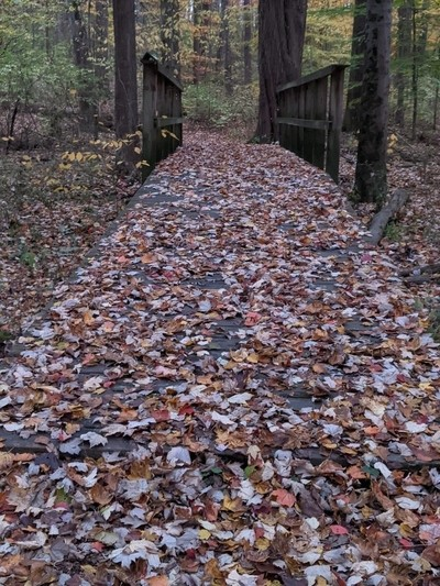 Rolling out the leaf carpet