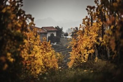 Vineyards in the Langhe hillside_02