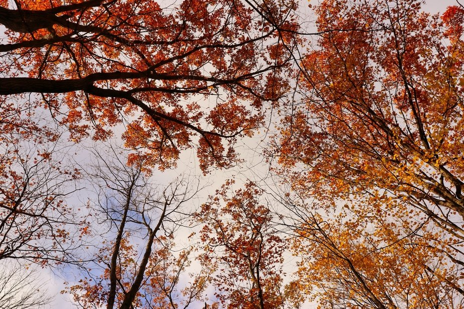 Sometimes looking up can bring a different perspective to the Autumn season