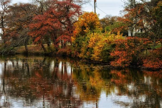 Reflective colors of fall