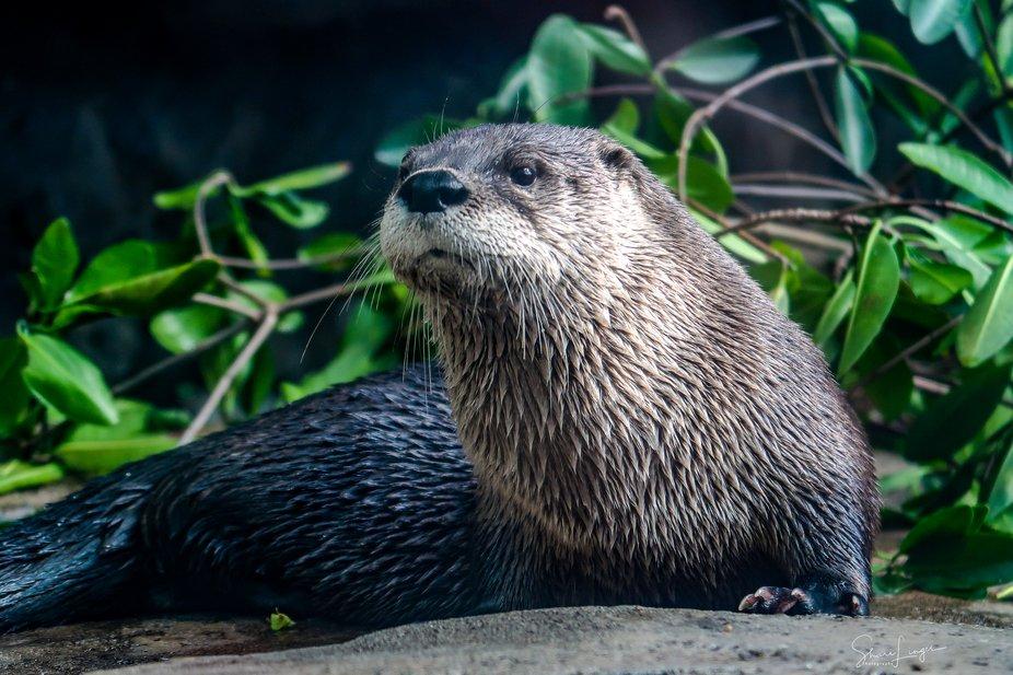 River Otter Florida Aquarium