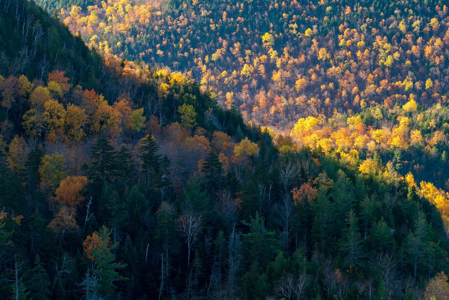 A telephoto color and texture study in the early morning from the Adirondacks. October 17th.