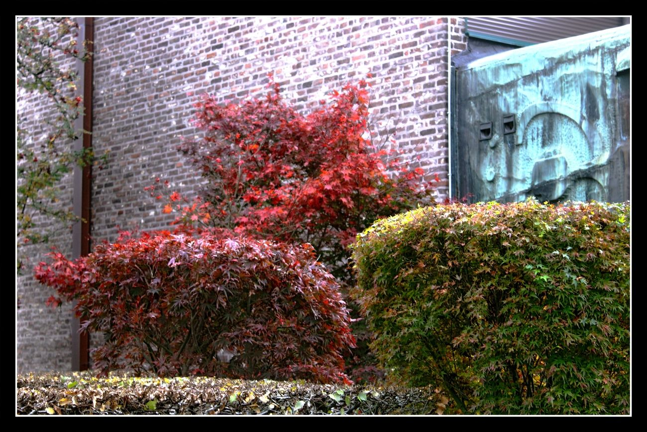 Autumn in Tienen (Belgium) 27/10/2020 It is wonderful how the colors in Nature change daily at this time of the year Theo-Herbots-Photography https://greetingsuittienen.blog