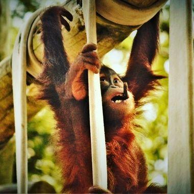Monkeyin