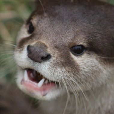 You Otter Smile More