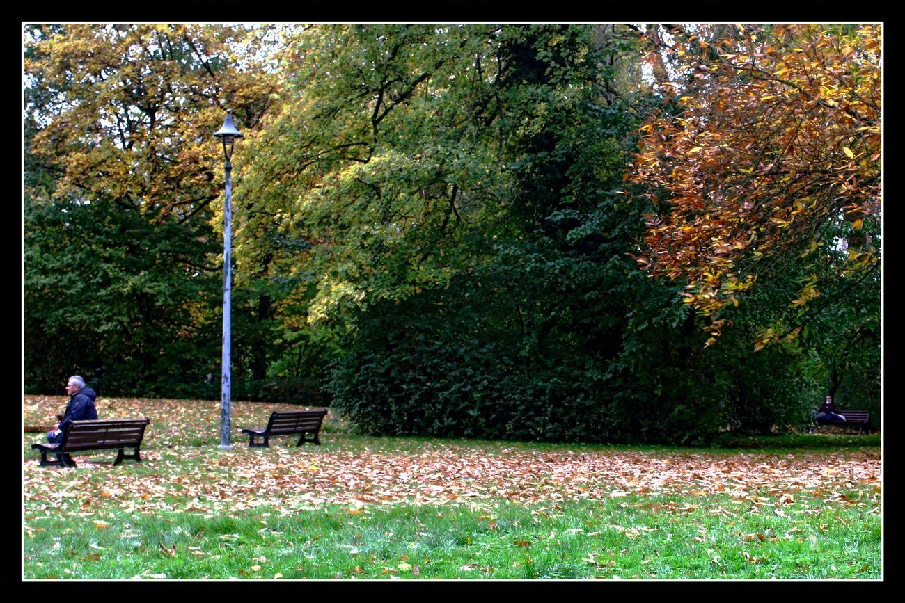 Autumn City Park Tienen (Belgium) 30/10/2020 It is amazing how the Fall colors change daily Theo-Herbots-Photography https://groetenuittienen.blog/