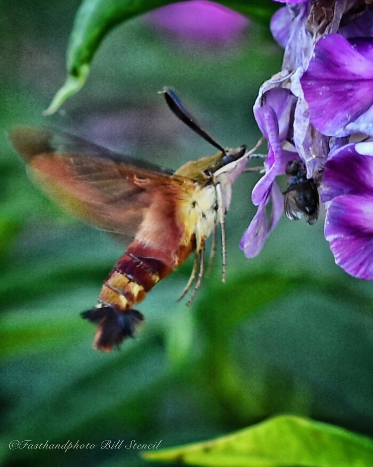 #flower #plant #flowers #iloveplants #floral #flowerlove #flowerphotography #botanical #beautiful #beauty #picoftheday #hummingbird #bird #time #motion #air #wings #fast #awesome #movement #nature #skills #perfect #challenge #look #day #light #forsale #art