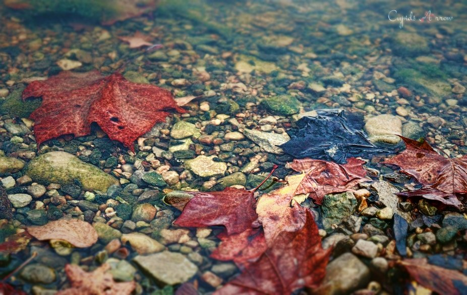 Traces of Fall Along the Shore
