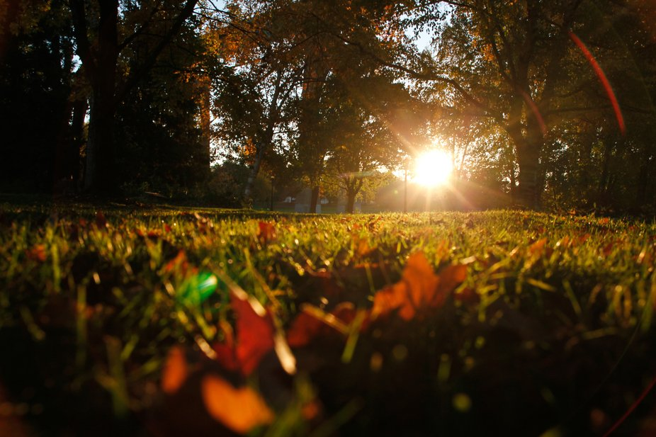 At a park in the early morning. Rising sun in the background, leaves and grass in the foreground.