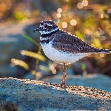Bokeh Bird