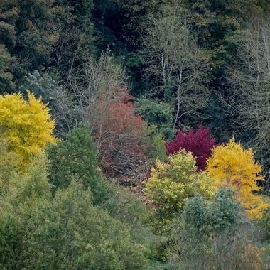 Group of trees in autumn colours
