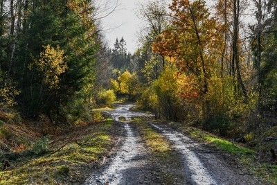 Forest road in southern Sweden