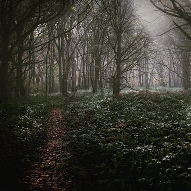 Path leading into a misty woodland