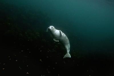 seal art no tag