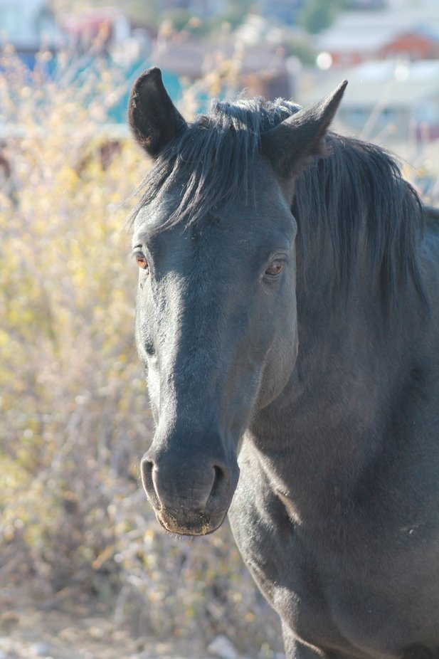 Visited Cold Creek Canyon in Nevada and a beautiful experience with a couple of the wild horses.