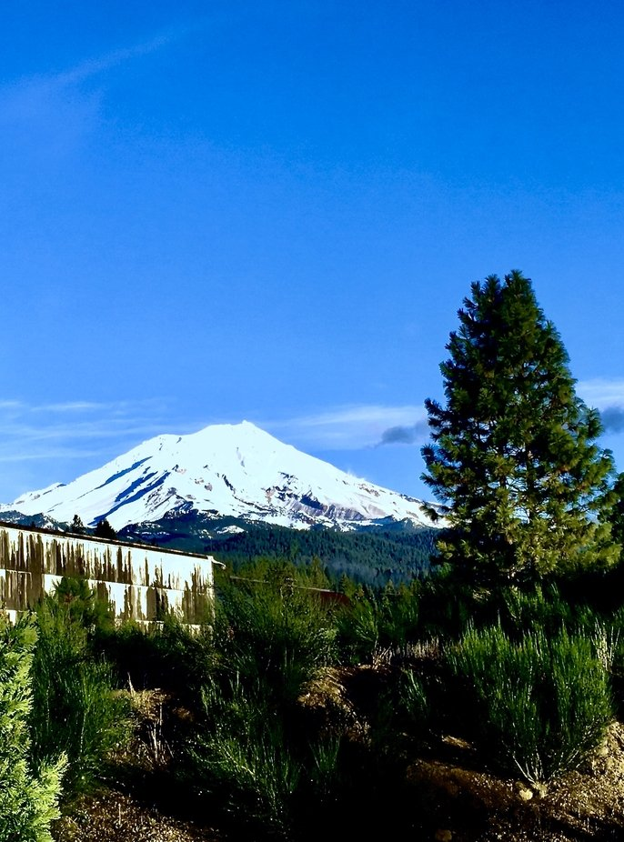 Mt. Shasta taken from the old McCloud Railroad yard.